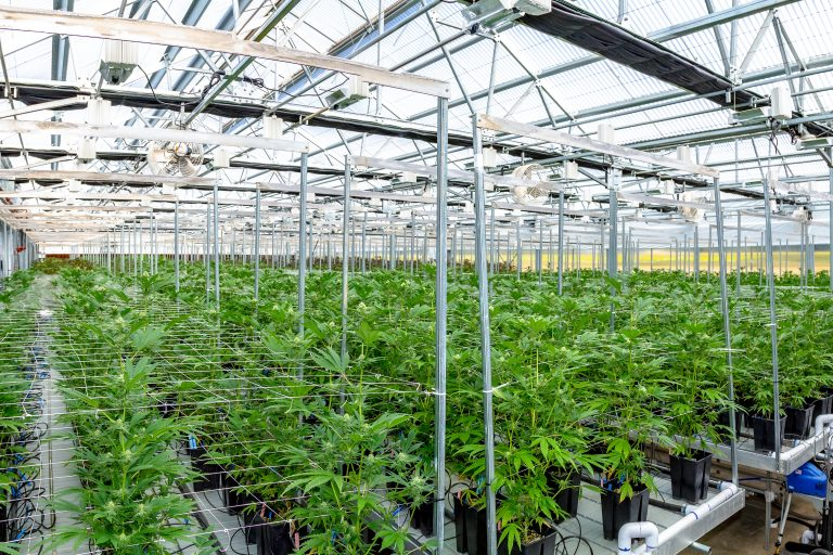 Indoor Hydroponic/greenhouse hybrid in Oregon grows marijuana for recreational use